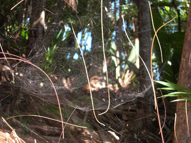 seychelles5_20070412_1551497756.jpg