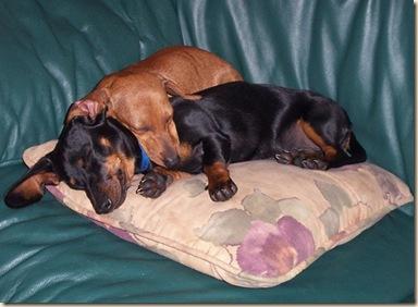 puppies 2[2]