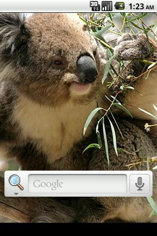 Koala Bear Live Wallpaper