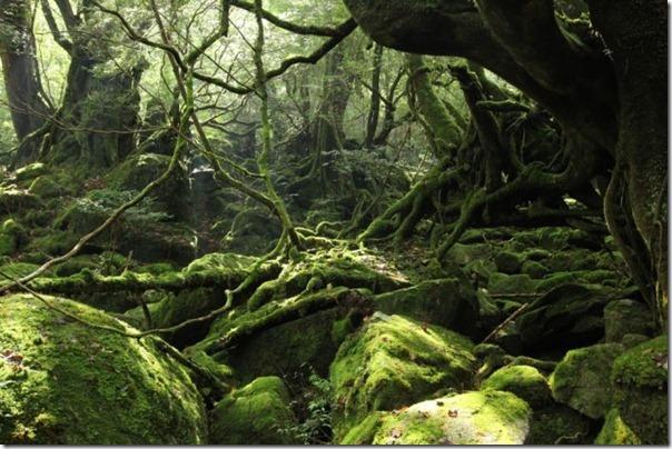 floresta no japão (9)
