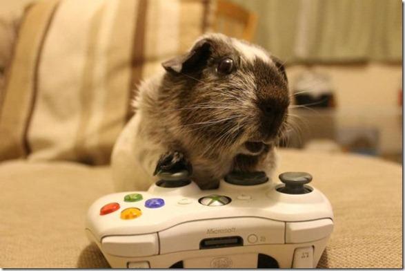 cute-funny-animals-13