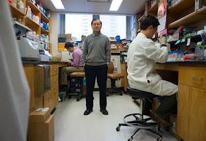 动物实验表明注射药物可预防艾滋