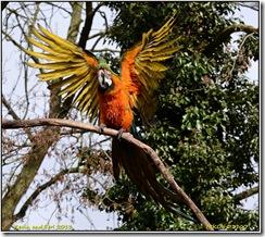 Tropical Birdland - variable light