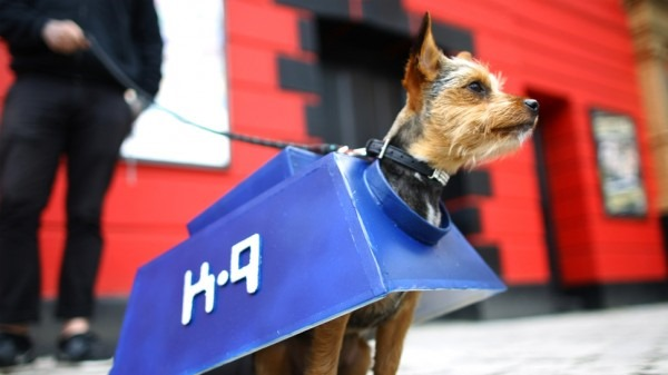 Chorkie K-9 Cosplay from Sci-Fi London Dog Show 1