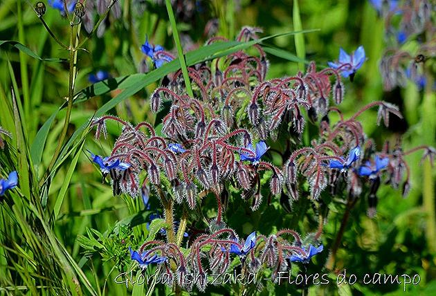 Glória Ishizaka -flor 31