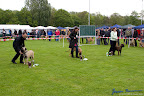 20100513-Bullmastiff-Clubmatch_30956.jpg