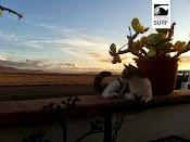 10822464 854641557899705 81600822 n Auf Regen folgt Sonnenschein in unserem Surfcamp auf Fuerteventura   Fotospecial der KW 47