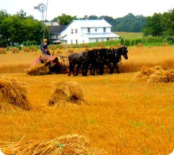 21-harvesting