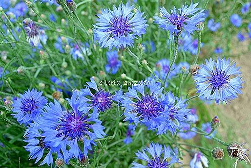 Azul - Glória Ishizaka 11