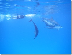 ハワイ イルカ