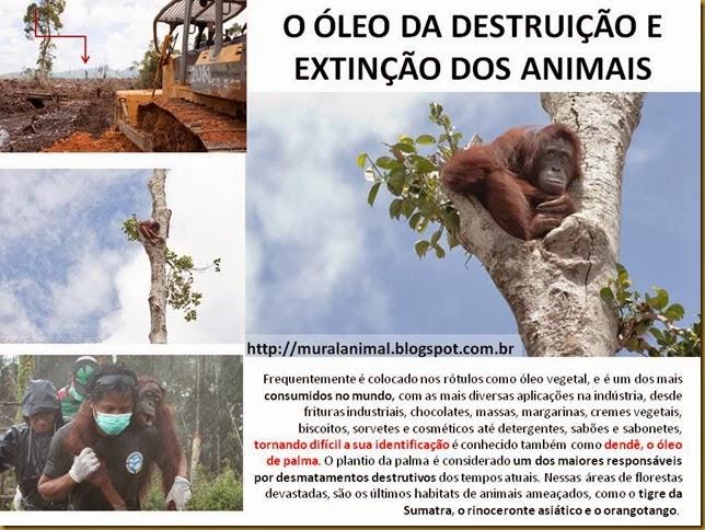 orangotango2