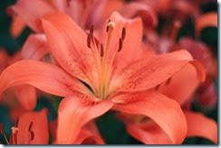 nybg-new-york-botanic-gardens-bronx-014
