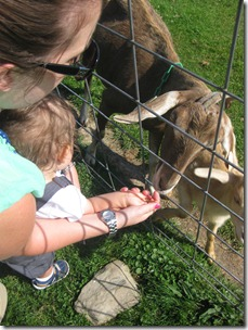 2012.06.24 4-Petting Zoo (24)