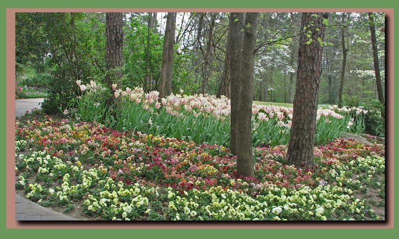 Garvan tulips2