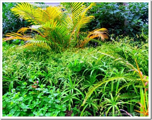 GardenGrowingIMG_7019
