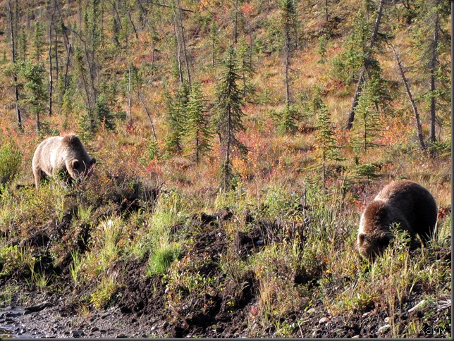 Grizzly Sow and cub at side of the road