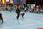 20130510-Bullmastiff-Worldcup-0960.jpg