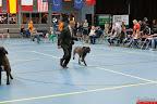 20130510-Bullmastiff-Worldcup-0960.jpg