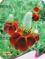 Cheap Seeds on Ebay and Amazon DIY Gardening