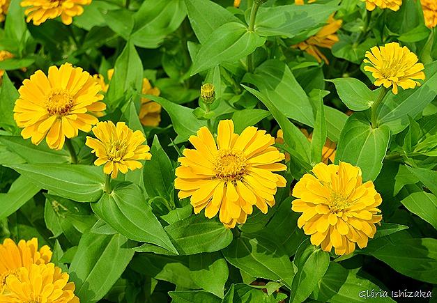 Glória Ishizaka - Flor amarela 18
