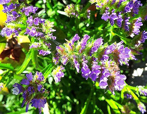 Azul - Glória Ishizaka 53