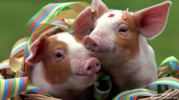 """""""Schwein gehabt!"""""""