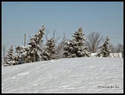 Snow, Winter Wonderland (35)