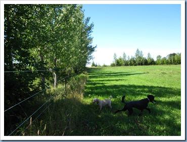 20110823_dogs-field_006