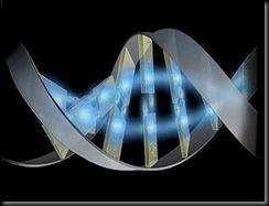 dec_genoma