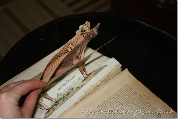 Antique flip book cow anatomy