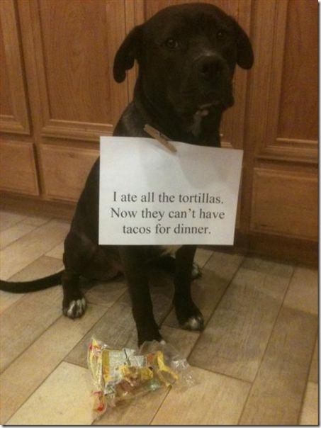 dog-shaming-bad-20