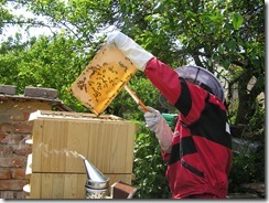 včelky a med květen 079