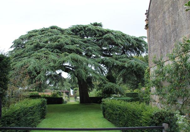 Hidcote garden (3)