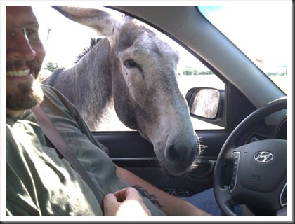 burro_in_the_car