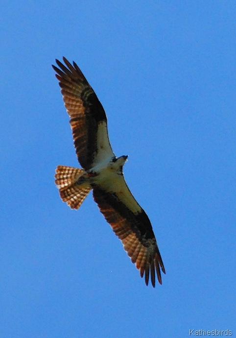 9. wings-kab