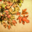 leaves4868shc1.jpg