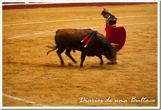 Toros_León-26