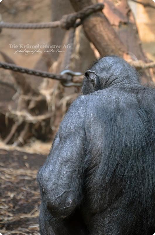 Zoo Frankfurt 100713 (19)