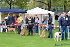 20100513-Bullmastiff-Clubmatch_30848.jpg