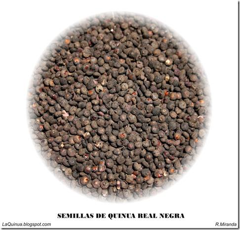 Semillas de Quinua Real Negra-Ruben Miranda_LaQuinua.blogspot.com