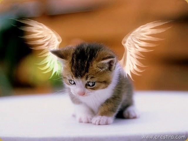 Angel_Kitty