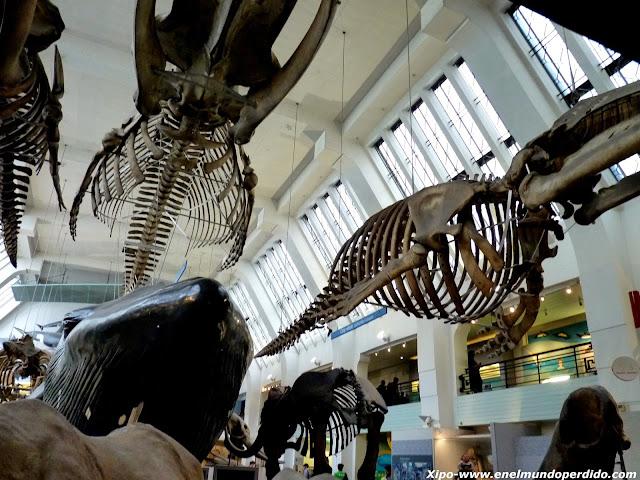 esqueletos-museo-historia-natural.JPG