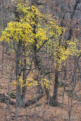Fall leaves near Wabasha