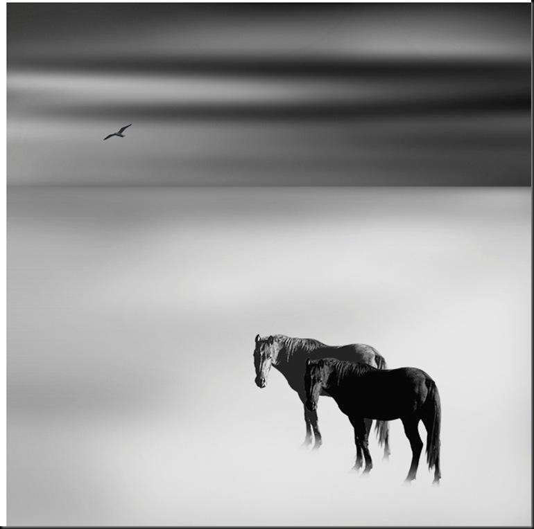 Il Paradiso dei Cavalli