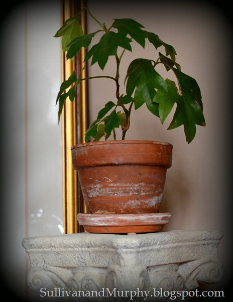 potted plant on column