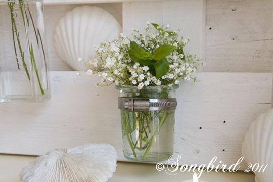 Baby Breath and Shells