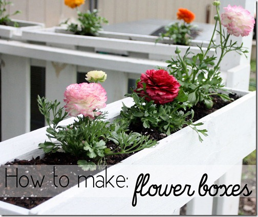 flower boxes graphic