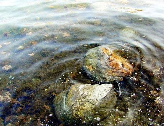 Fondo del fiume a Cornate