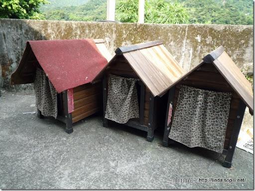 猴硐(侯硐)-貓咪的家
