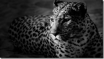 imagini desktop-animale